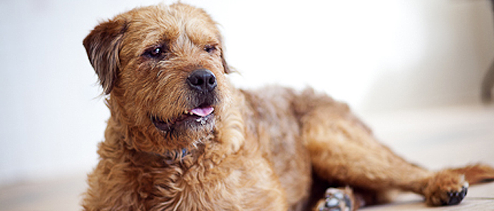 Humane Society of Westchester Fozzy